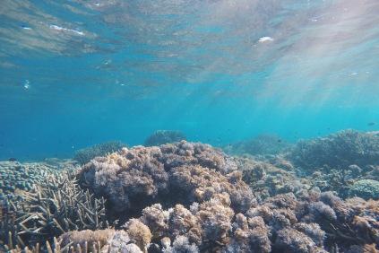 Coral reef in Kanawa Island