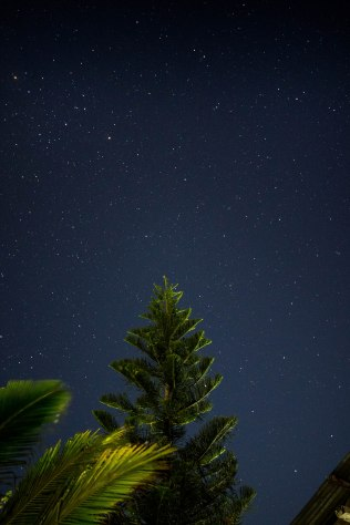 Shining stars behind a pine tree
